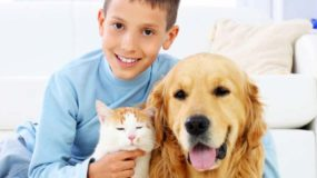 Pet Urine Odour – Urine Odour Removal