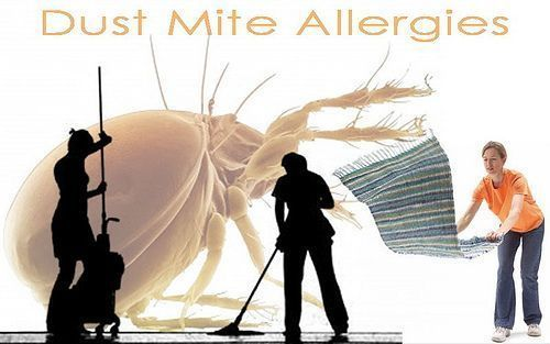 dustmites.jpg - large